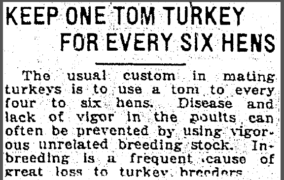 Keep One Tom Turkey for Every Six Hens, Jackson Citizen Patriot newspaper article 1 February 1922