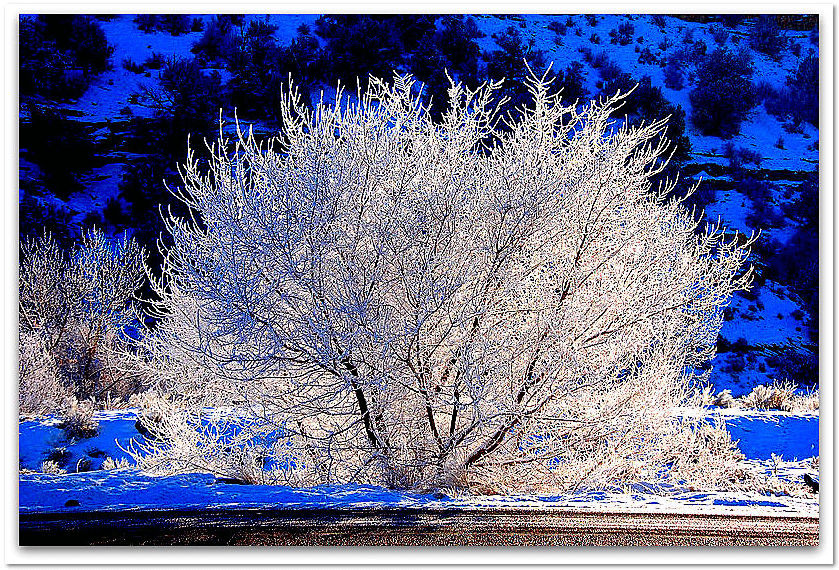 photo of a frozen tree