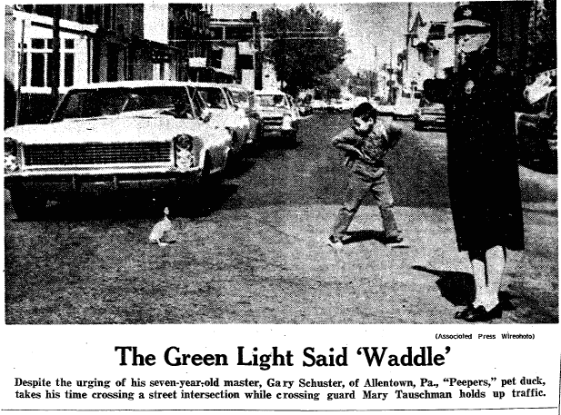 photo of crossing guard Mary Tauschman, Springfield Union newspaper photograph 27 April 1969