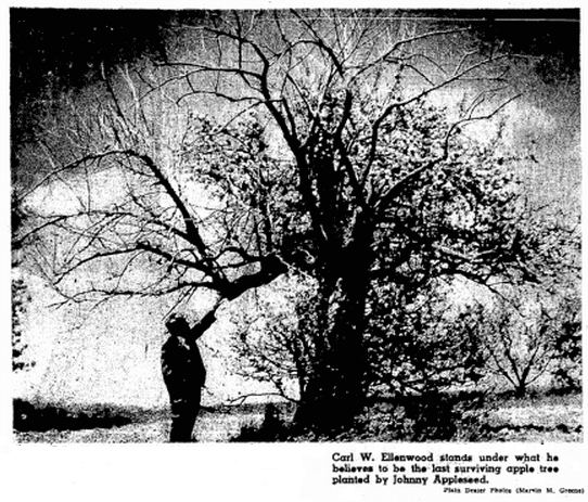 a photo of the last surviving apple tree planted by Johnny Appleseed, Plain Dealer newspaper article 30 May 1961