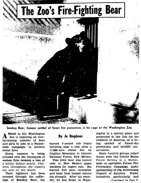 article about Smokey the Bear, Evening Star newspaper article 13 June 1954