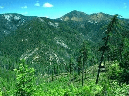 photo of the Kalmiopsis Wilderness in the Rogue River-Siskiyou National Forest of southwest Oregon