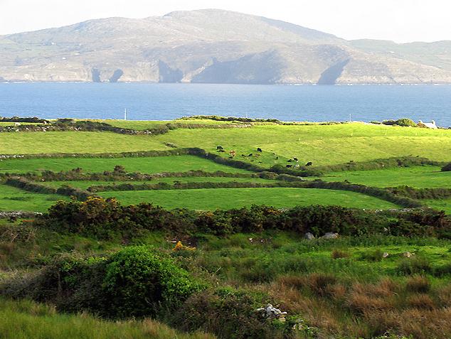photo of a pasture near Ballyieragh, County Cork, Ireland