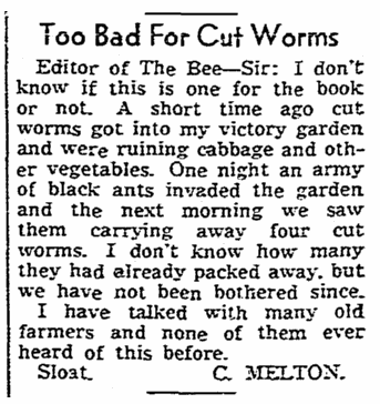 letter about a WWII Victory Garden, Sacramento Bee newspaper article 30 July 1943