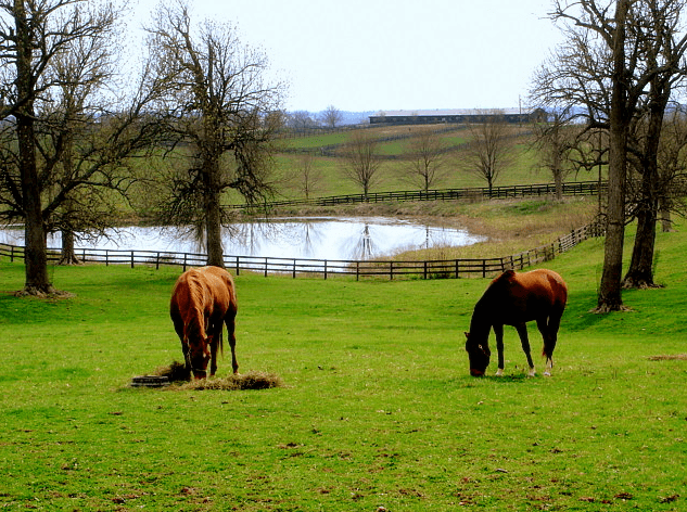 photo of a horse farm in bluegrass country, south of Paris, Kentucky