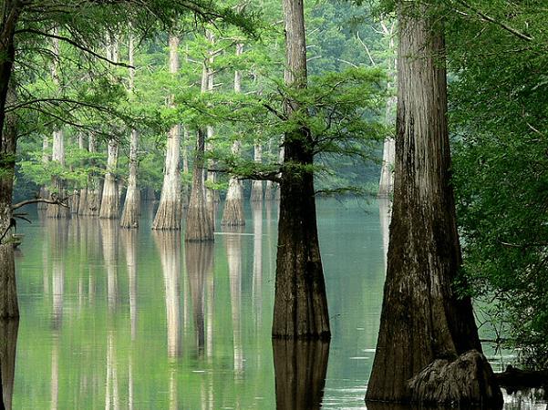 Photo: White River in Arkansas. Credit: Linda Tanner; Wikimedia Commons.