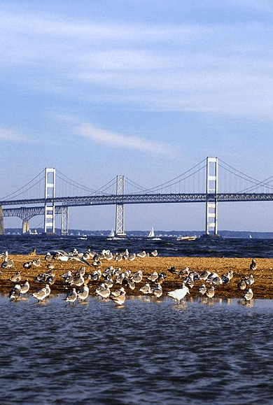 Photo: Chesapeake Bay Bridge, connecting Maryland's Eastern and Western Shores