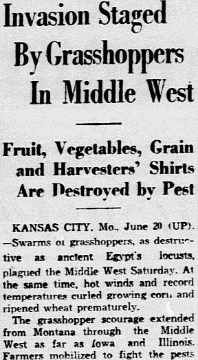 An article about an infestation of grasshoppers, Dallas Morning News newspaper article 21 June 1936