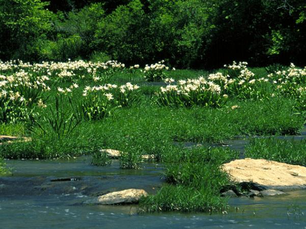 Photo: Cahaba River National Wildlife Refuge, Alabama. Credit: U.S. Fish and Wildlife Service; Wikimedia Commons.