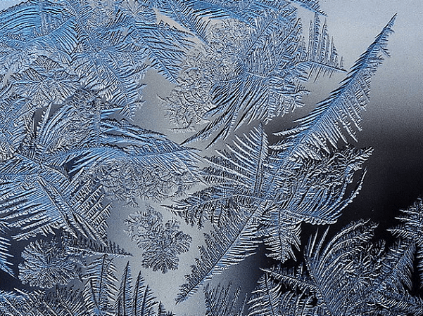Photo: Ice-ferns. Credit: Schnobby; Wikimedia Commons.