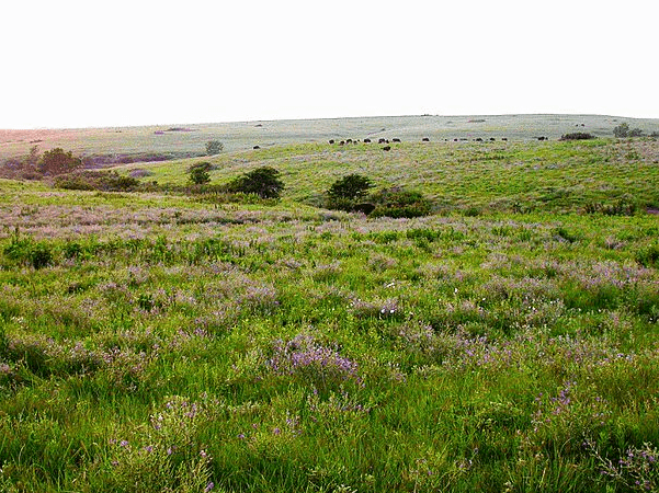 Photo: Flint Hills, Kansas. Credit: Edwin Olson, U.S. Fish and Wildlife Service; Wikimedia Commons.