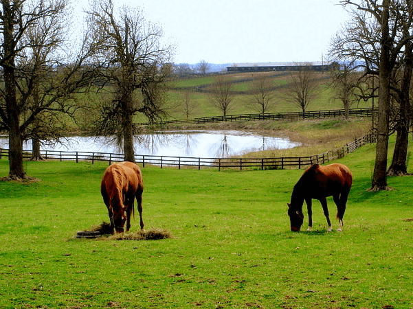 Photo: horse farm in bluegrass country, South of Paris, Kentucky. Credit: Peter Fitzgerald; Wikimedia Commons.
