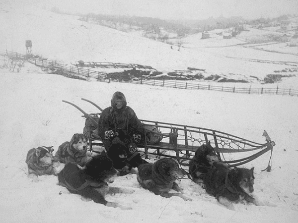 Photo: dog team resting near sled, with driver, in snow-covered fields, Alaska, c. 1900-1923. Credit: Library of Congress, Prints and Photographs Division.