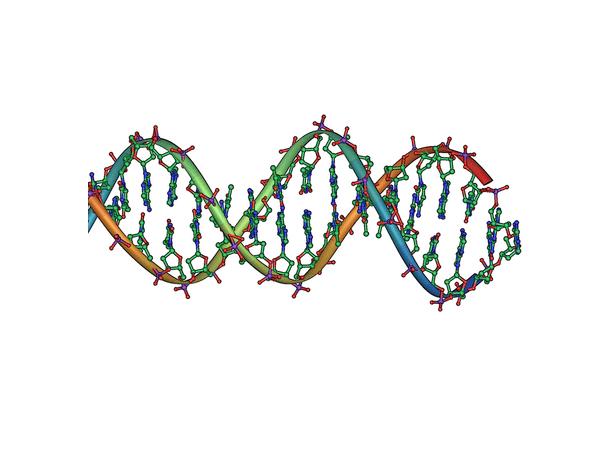 Illustration: DNA double helix horizontal. Credit: Jerome Walker; Wikipedia.