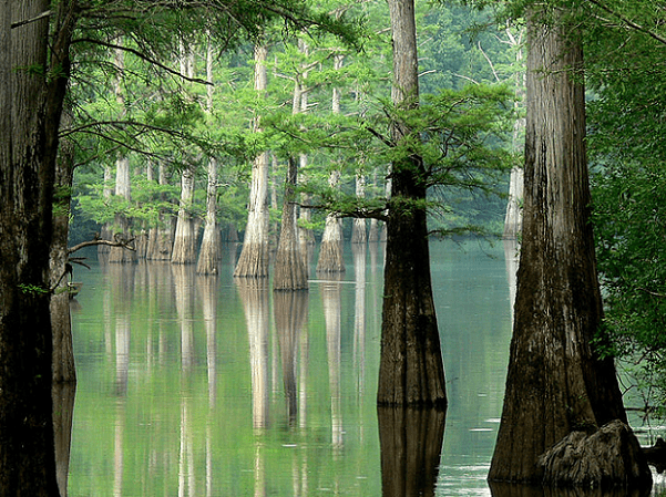 Photo: White River, Arkansas. Credit: Linda Tanner; Wikimedia Commons.