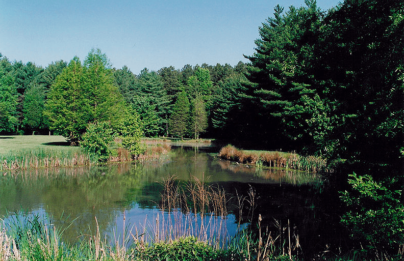Photo: Blackbird Pond on the Blackbird State Forest Meadows Tract in New Castle County, Delaware