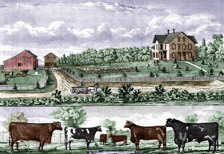 Illustration: Iowa farm, Muscatine County, Iowa