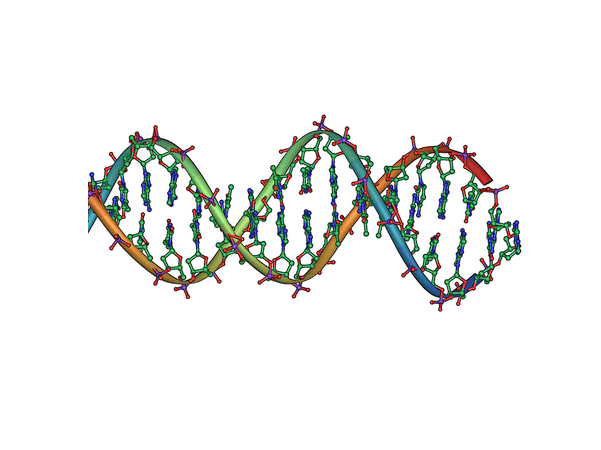 Illustration: DNA double helix horizontal. Credit: Jerome Walker; Wikipedia.