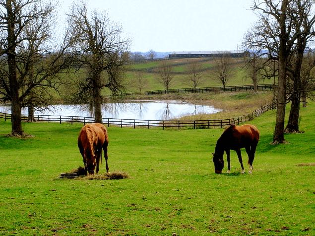 Photo: horse farm in bluegrass country, south of Paris, Kentucky