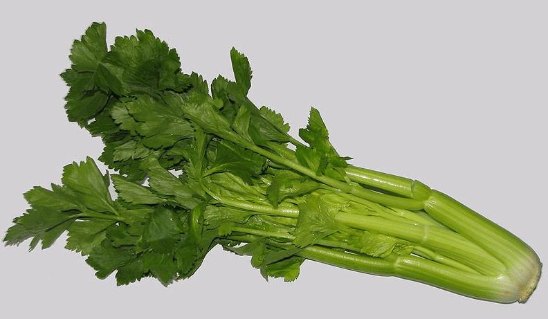 Photo: celery