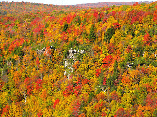 Photo: Blackwater Canyon, West Virginia. Credit: ForestWander; Wikimedia Commons.