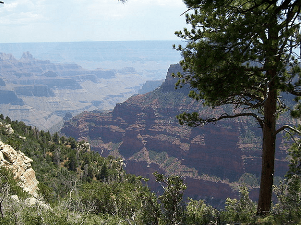 Photo: the North Rim of the Grand Canyon. Credit: David Jolley; Wikimedia Commons.