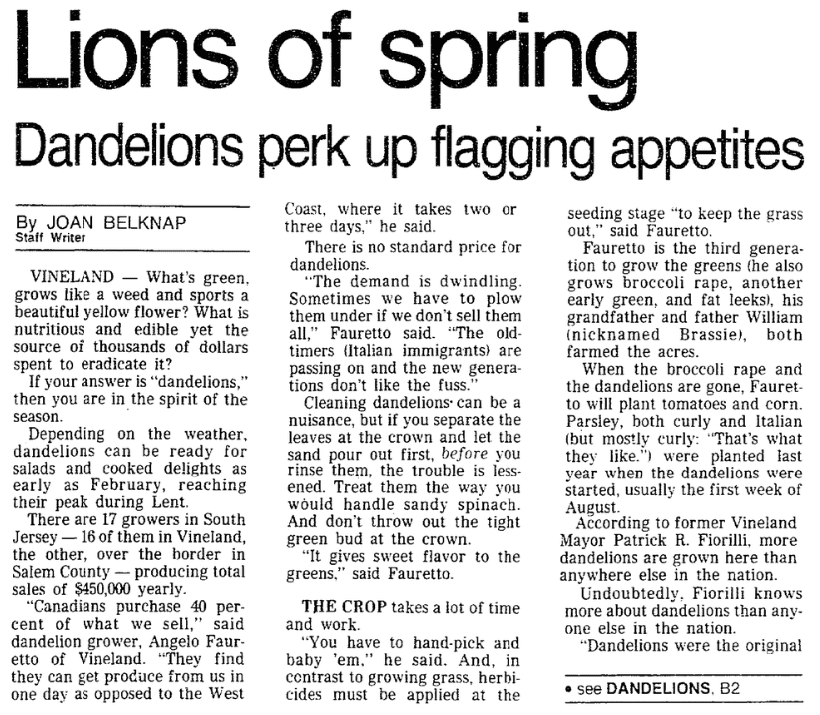 An article about dandelions, Trenton Evening Times newspaper article 6 April 1988