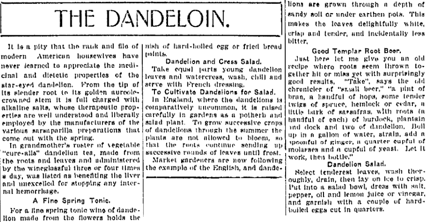 An article about dandelions, Wilkes-Barre Times-Leader newspaper article 19 May 1916