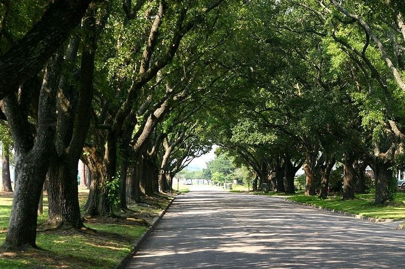 Photo: live oaks overarching the street on East Bay Street, Georgetown, South Carolina