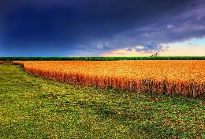 Photo: Kansas summer wheat and storm. Credit: James Watkins; Wikimedia Commons.