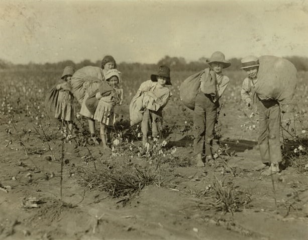 Photo: unidentified young children picking cotton in Texas, 1913
