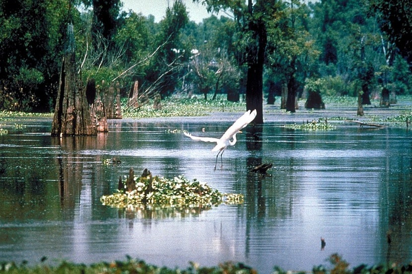 Photo: the Atchafalaya Basin in Louisiana, in the Sherburne Complex Wildlife Management Area, a Nature Conservancy reserve